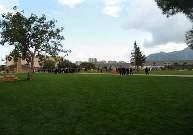 Troppo vento, i parchi di Palermo chiusi per sicurezza
