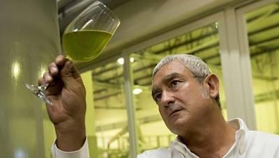 Olio del Mediterraneo all'Expo 2015, la proposta di Barbera