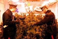 Droga e furti nelle località marine, arresti dei Carabinieri