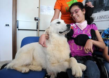 Light, il cane addestrato a Castelbuono che assiste la piccola Francesca