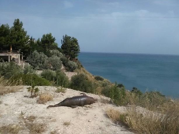 Termini, un delfino morto ritrovato in collina