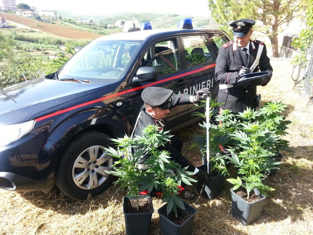 Bolognetta, coltivava marijuana in casa, arrestato