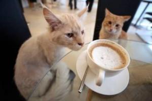 Apre a Parigi il primo bar dei gatti