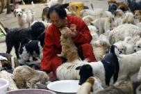 """Cina, amore """"estremo"""" per i cani: ne ha 140 in casa"""