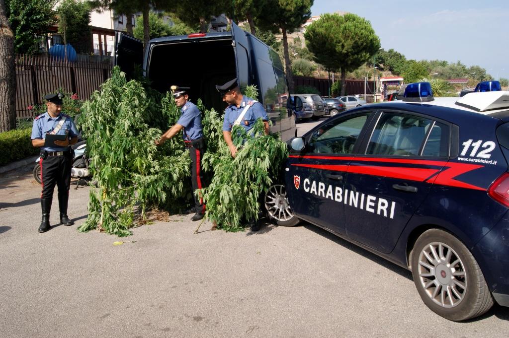 Castelbuono, sorpresi a coltivare marijuana, arrestati tre ventenni