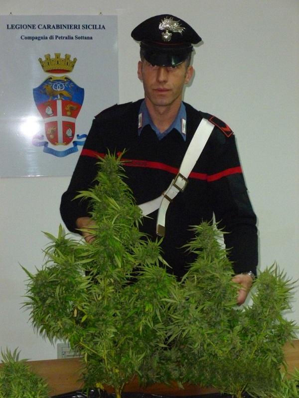 Gangi, coltivava droga nel balcone di casa, arrestato dai Carabinieri
