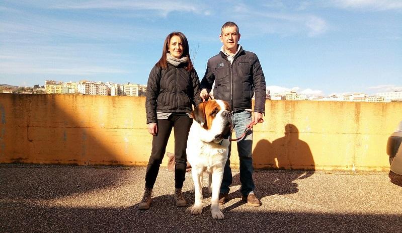E' di Caccamo il cane San Bernardo più bello d'Italia