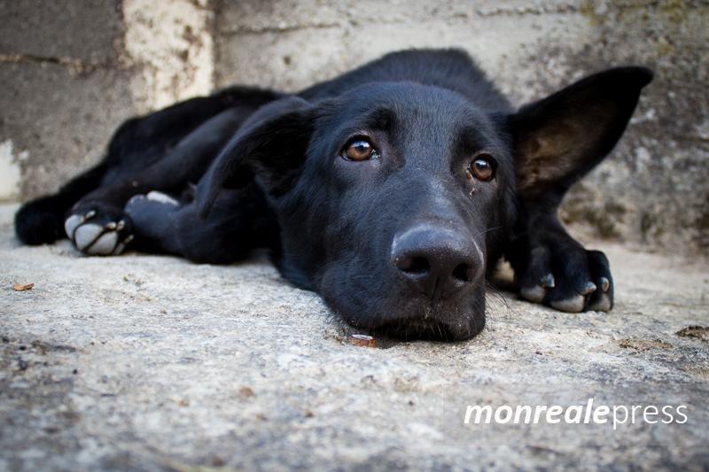Polizzi Generosa, contributo di 1.500 euro per chi adotta un cane randagio
