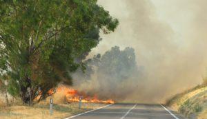 incendio-statale-290-2