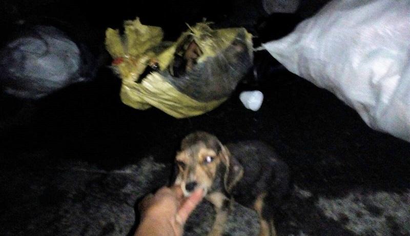 Macabra scoperta a Termini: trovati tre cagnolini nei cassonetti dei rifiuti