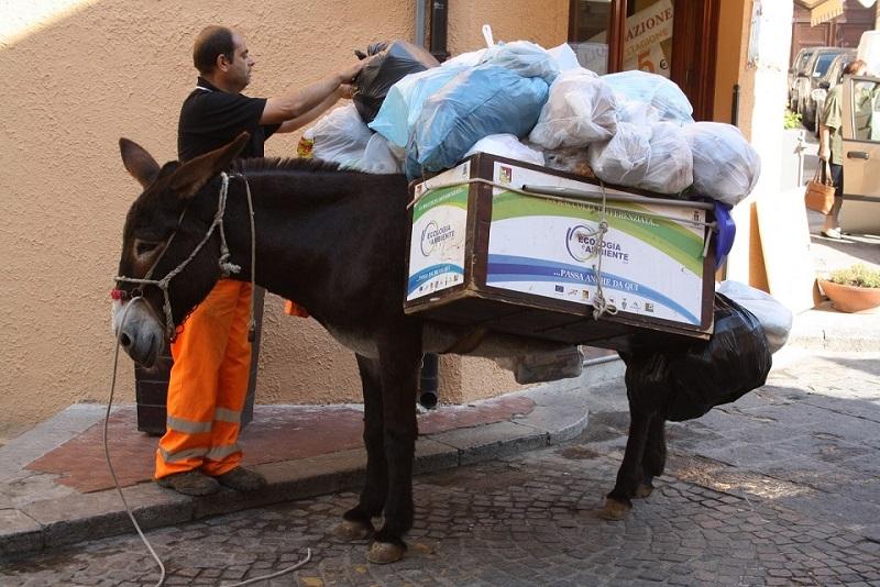 """Gli asini e la raccolta differenziata: """"Castelbuono ci ripensi. Gli animali non sono schiavi"""""""