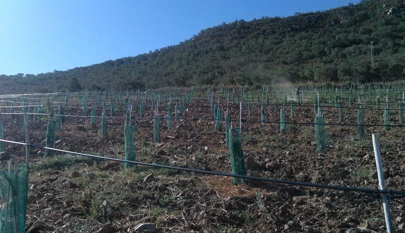 """Castelbuono, il sindaco ai cittadini: """"Mettete a disposizione il vostro terreno per le colture"""""""