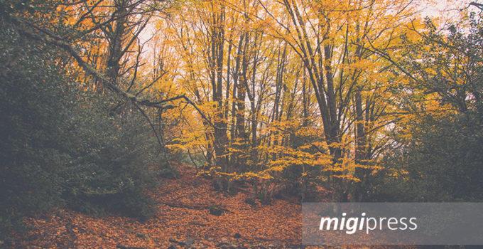 salvaguardare albero monito nordic walking regione-parco