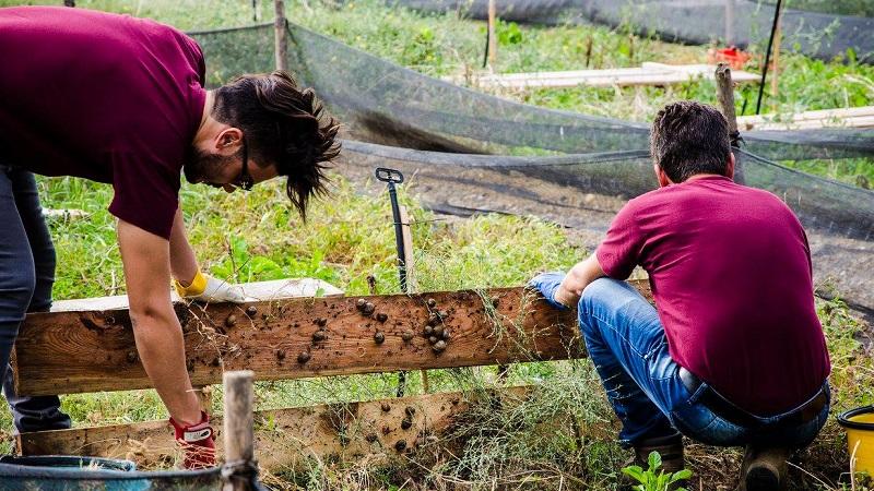 Lumaca Madonita, l'allevamento più grande d'Italia apre le porte con una giornata formativa