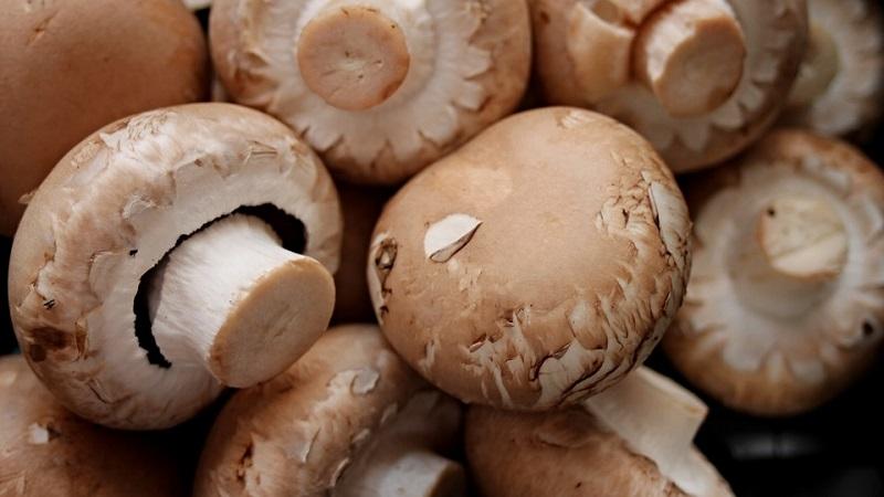 funghi anteprima