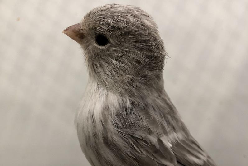 Campionati mondiali di ornitologia, a Reggio Emilia 4 medaglie per un cerdese