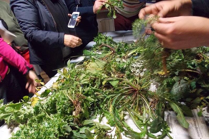 Impariamo a riconoscere le verdure spontanee, un corso all'eremo di Liccia