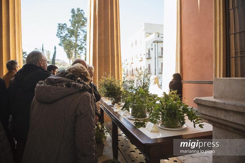 Le erbe spontanee delle Madonie protagoniste alla mostra Zagara