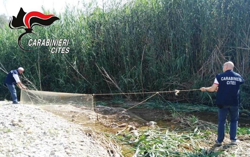 A caccia di specie protette con reti e richiami vivi: nei guai un 61enne