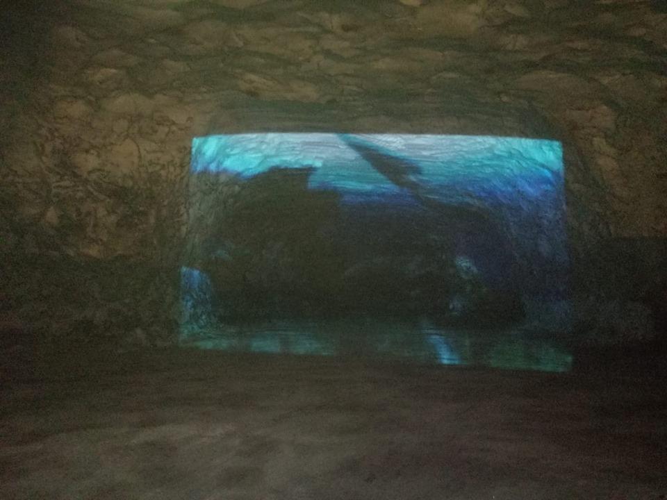 Museo Sottosale, ecco i mostri marini: successo per l'installazione multimediale