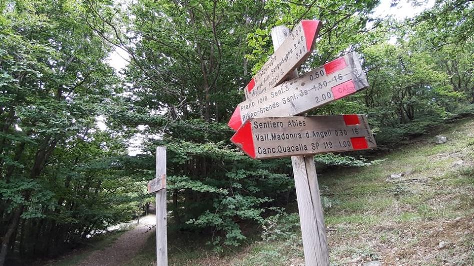Alla scoperta degli Abies nebrodensis, il trekking nel Parco delle Madonie