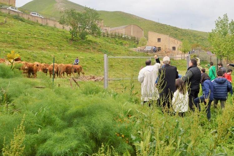 Festa di Sant'Isidoro, 1200 litri di latte dal Sodalizio alle famiglie in difficoltà