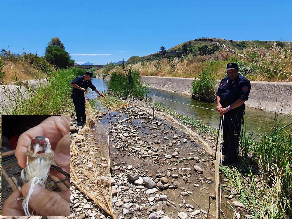Sorpreso a catturare cardellini, i carabinieri arrestano un uomo