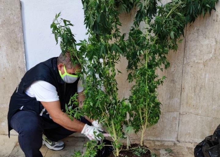 La coltivazione di cannabis in casa: denunciato 47enne termitano