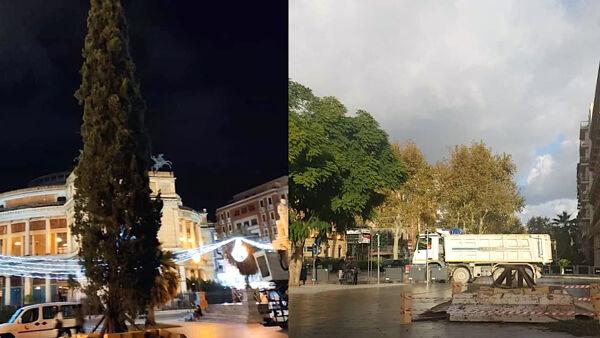 Un cipresso per albero di Natale, Marino: 'L'abete delle Madonie si era danneggiato'